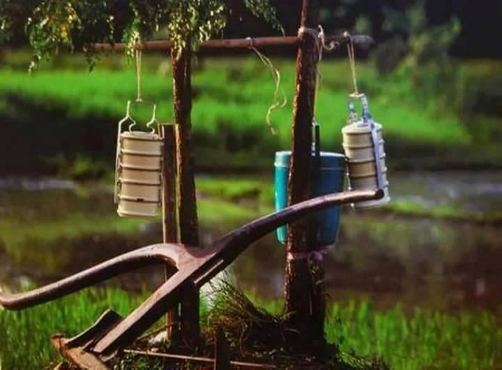 ไอดินกลิ่นข้าว กาญจนบุรี