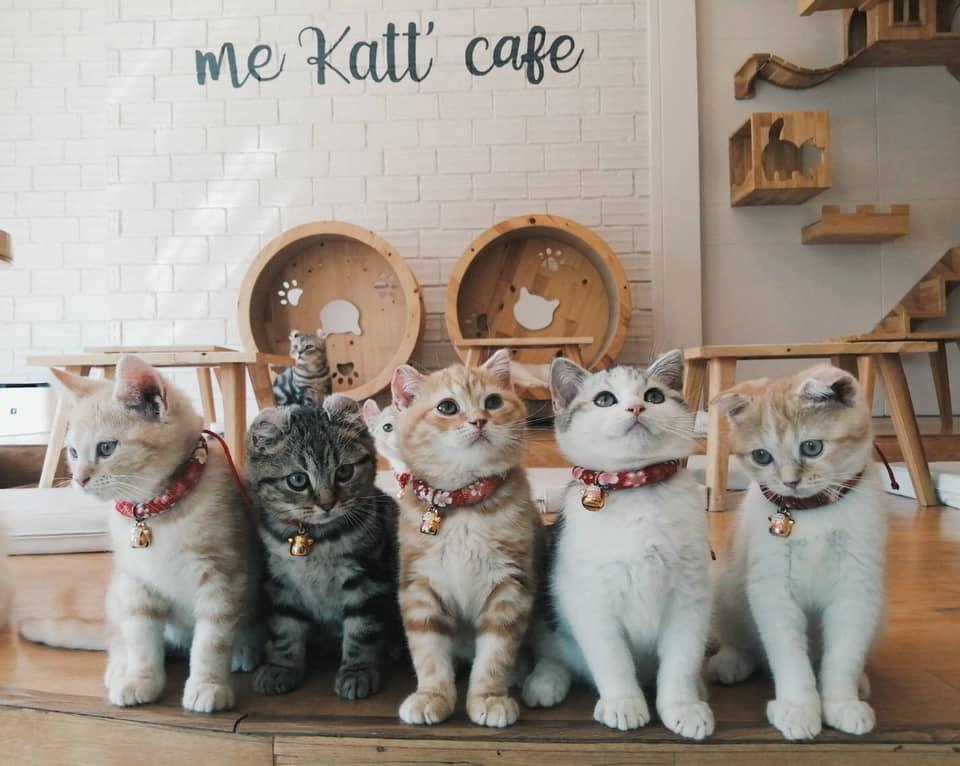 Me Katt Café